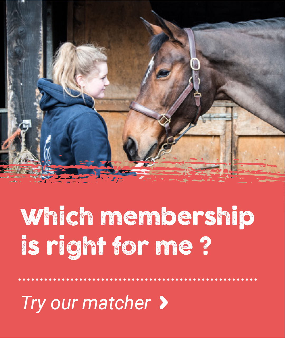 British Grooms Association Member Options