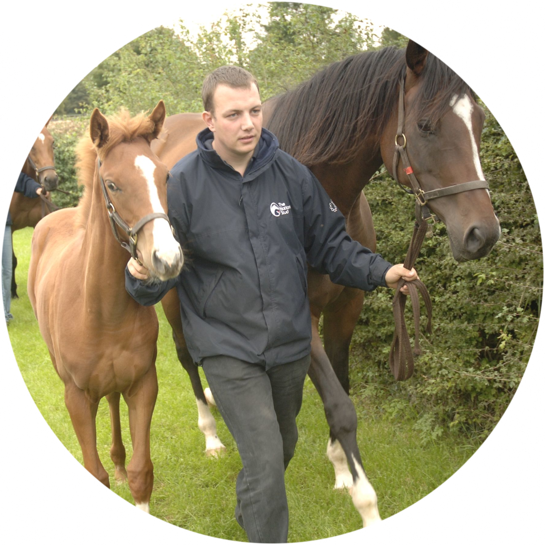 British Grooms Association member with racehorses