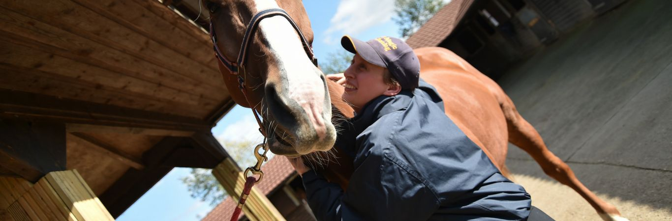 groom training with Equine skills cv