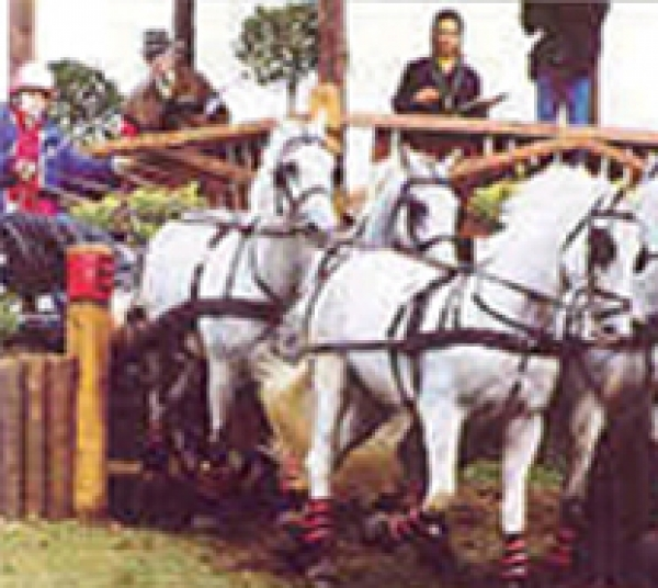 Career in carriage driving with British Grooms Association