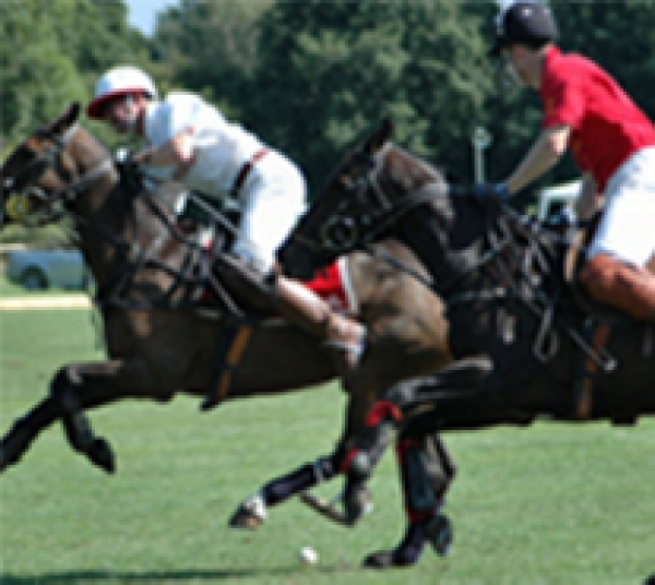 Career in Polo with British Grooms Association